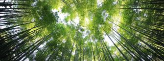 EIT Climate-KIC ClimAccelerator carbon removal programme