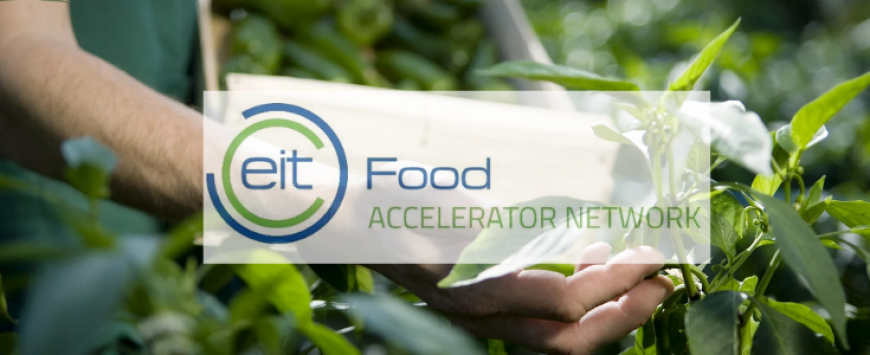 EIT Food Accelerator Network programme